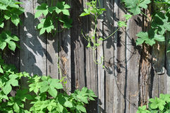 Fence and plant Stock Photography