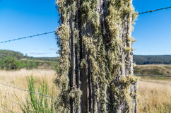 Fence post covered in sage green lichen Royalty Free Stock Image