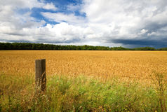 Fence post and hay field Stock Image