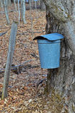 Fence post and sap bucket Royalty Free Stock Images