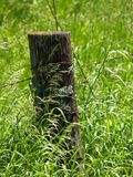 Fence post2. Country fence post in a green field Stock Images