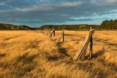 Fence Posts Line Royalty Free Stock Image