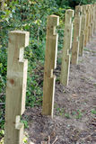Fence posts in a row. Royalty Free Stock Images