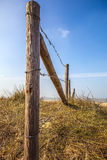 Fence protecting the Dutch dunes covered which beach grass (or marram grass) Royalty Free Stock Image