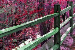 Fence with Red Blossoms. A fence by the river with colored blossoms Stock Photography