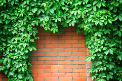 Fence red brick wall with hop Royalty Free Stock Image