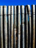 Fence Of reeds Royalty Free Stock Images