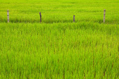 Fence of rice field, Thailand Stock Photos