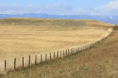 Fence Row in Eastern Wyoming Royalty Free Stock Image