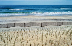 Fence and Sea. New plantings along the sand dunes in Surf City on Long Beach Island along the Jersey shore Royalty Free Stock Photography