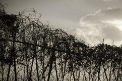 Fence and sky Stock Photos