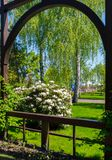 Fence with a small arch leading to a green garden with flowering bushes with white flowers. For your design Stock Photos