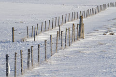 Fence on the snow Stock Image