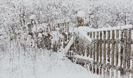 fence in the snow an old wooden snowfall holiday winter landscape with thin bushes of trees in the snow royalty free stock images