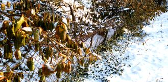 The fence in the snow royalty free stock images