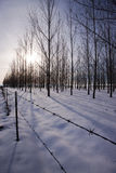 Fence by snowy orchard. Royalty Free Stock Photo