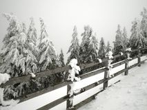 Fence and Snowy Trees Royalty Free Stock Images