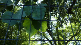 Fence sunshine beams green leaves summer day stock footage