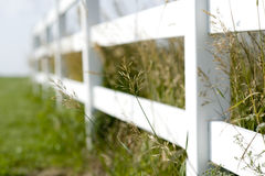 Fence and tall grass Royalty Free Stock Images