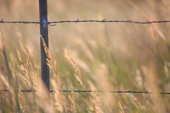 Fence and tall hay. Closeup photo of a fence in the country and tall bluestem hay Royalty Free Stock Image