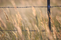 Fence and tall hay. Closeup photo of a fence in the country and tall bluestem hay Stock Images