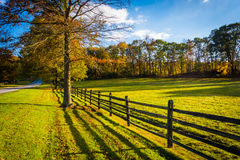 Fence and tree along a country road in rural York County, Pennsy Stock Image
