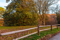 Fence and tree in Lullwater Park, Atlanta, USA. The wooden fence and the big magnolia tree in the Lullwater Park, Atlanta, USA Royalty Free Stock Image
