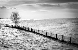 Fence and tree on a snow covered farm field in rural Carroll Cou Stock Photos