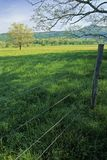 Fence, Tree, Spring. Spring Landscape, Fence, Cades Cove, Great Smoky Mtns NP, TN stock images