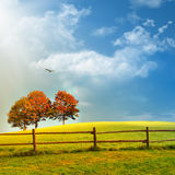 Fence and trees. On the field,summer in the nature Royalty Free Stock Photos