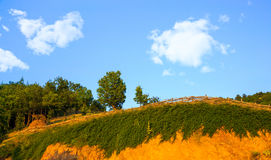Fence and Trees on Hilltop on Sunny Day Stock Image