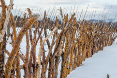 Fence of twigs in winter Stock Photo