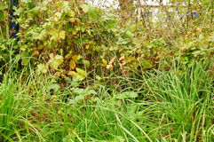 Fence vegetation Royalty Free Stock Photo