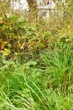 Fence vegetation Stock Image