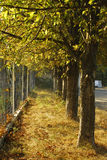 Fence vs Trees Royalty Free Stock Image