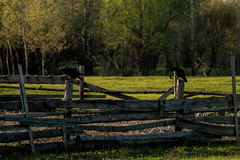The fence on which sit two ravens. Beautiful almost collapsed wooden fence, very much in the spirit of the past Stock Photo