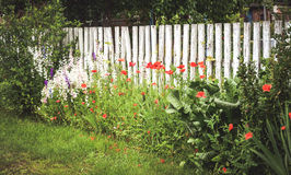 Fence white wooden beams, green grass and red flowers. Shabby old fence with white wooden beams, green grass and red flowers Royalty Free Stock Images