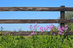 Fence and wild flowers royalty free stock photos