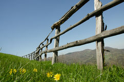 Fence and wild flowers Royalty Free Stock Photo