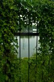 Fence and Wild Plants. On the Edge of the Lake Royalty Free Stock Image