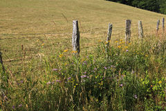 Fence and Wildflowers. Split rail fence with wildflowers beside a field in the background royalty free stock photo