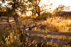 Fence winding through a gary oak forest glade, Victoria, BC, Can Stock Images