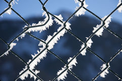 Fence, winter texture, background Royalty Free Stock Photography