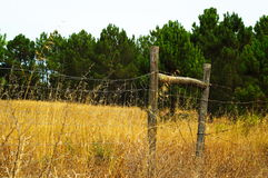 Fence. Wired fence on a golden field and a green background Royalty Free Stock Photography