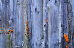 Fence from wooden boards close up Royalty Free Stock Images