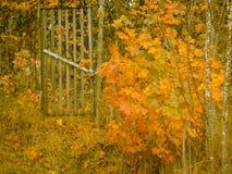 Fence, wooden gate, garden entrance, Golden leaves, autumn background. Fence, wooden gate garden entrance, Golden leaves autumn background stock photo