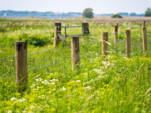 Fence of wooden posts and barbed wire surrounded by lush vegetat Stock Photos