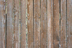 Fence from wooden vertical planks as background closeup Royalty Free Stock Photography