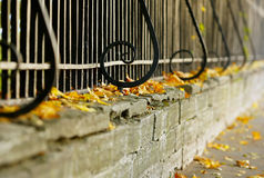 The fence and yellow leaves Royalty Free Stock Photo