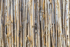 Fence of young bamboo Royalty Free Stock Images